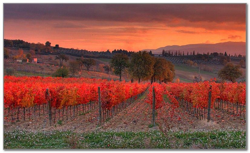 Умбрии (Umbria) wineaxe.ru